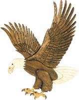 american eagle canada application form