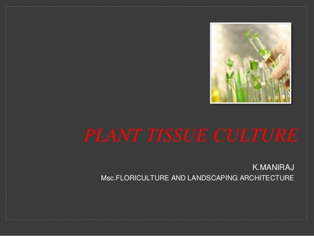 application of plant tissue culture in floriculture