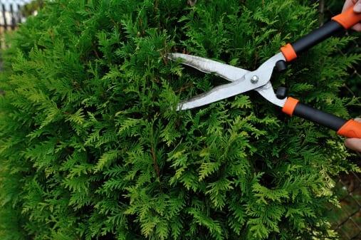 application to injure tree toronto