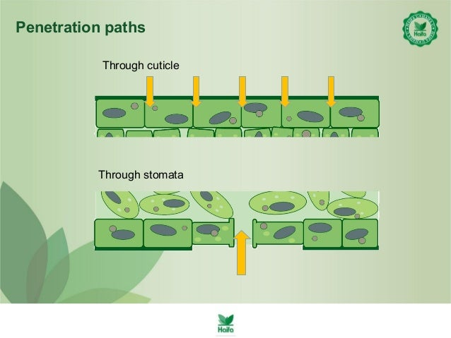 application of surface tension in food and nutrition